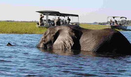 Elephant in the Chobe River